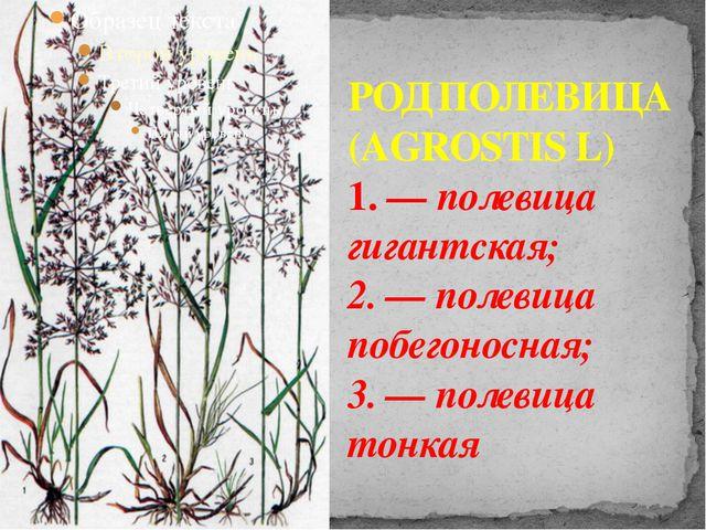 РОД ПОЛЕВИЦА (AGROSTIS L) 1. — полевица гигантская; 2. — полевица побегоносна...