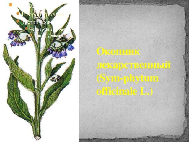 Окопник лекарственный (Sym-phytum officinale L.)