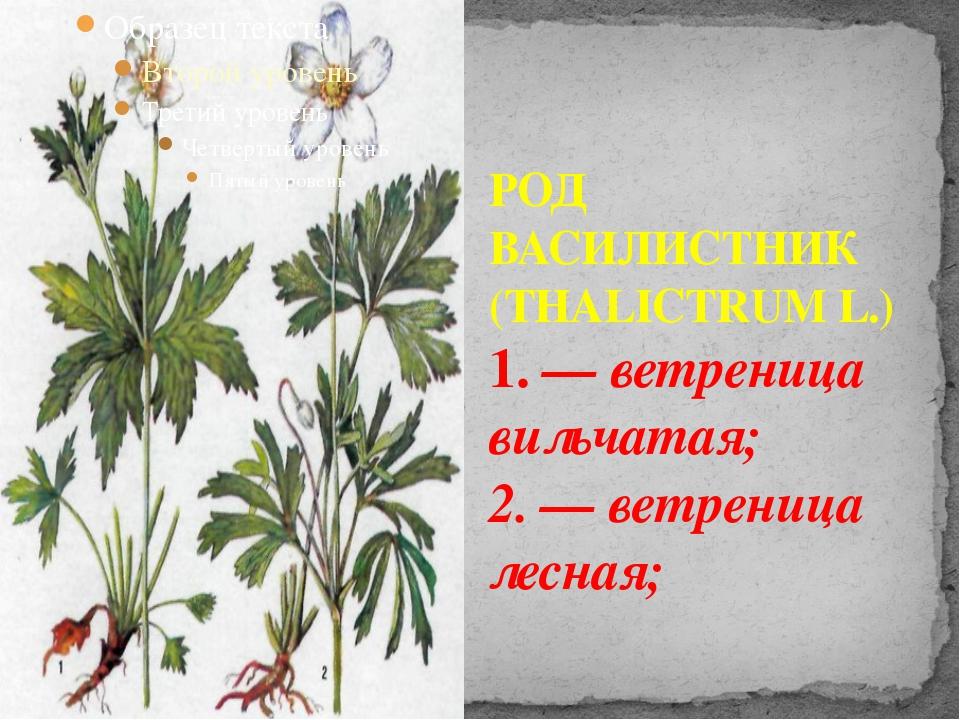 РОД ВАСИЛИСТНИК (THALICTRUM L.) 1. — ветреница вильчатая; 2. — ветреница лесн...