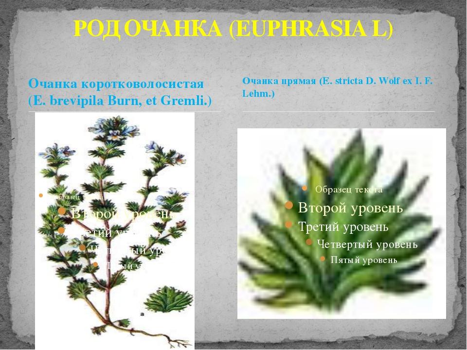 Очанка коротковолосистая (Е. brevipila Burn, et Gremli.) РОД ОЧАНКА (EUPHRASI...