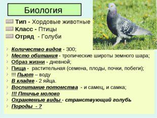 Биология Тип - Хордовые животные Класс - Птицы Отряд - Голуби Количество видо