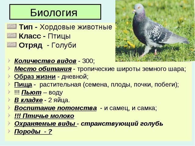 Биология Тип - Хордовые животные Класс - Птицы Отряд - Голуби Количество видо...