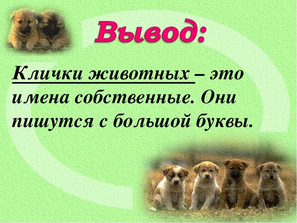 Клички животных – это имена собственные. Они пишутся с большой буквы.