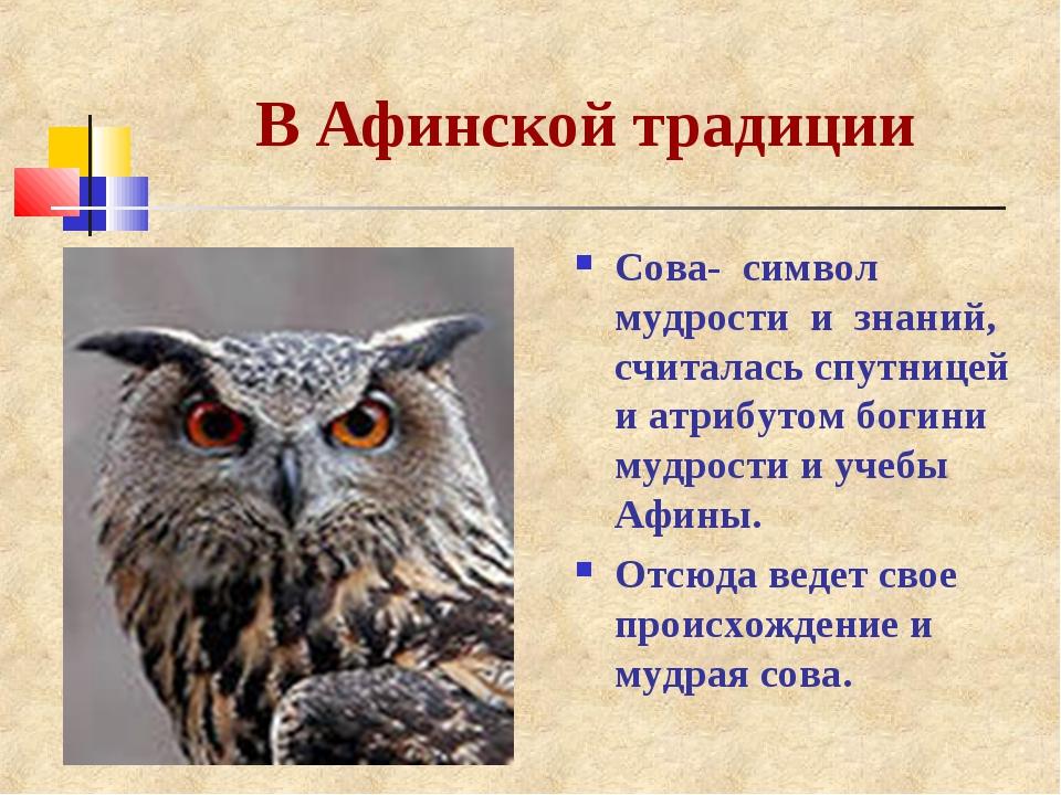 сова как символ мудрости картинка дорогая