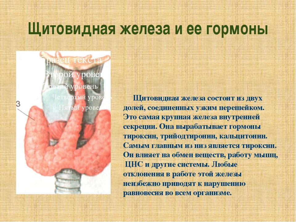 Щитовидная железа и ее гормоны Щитовидная железа состоит из двух долей, соеди...