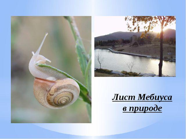 Лист Мебиуса в природе