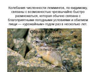Колебания численности леммингов, по-видимому, связаны с возможностью чрезвыча