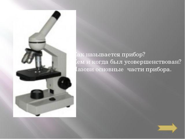 Какой вид корневой системы изображён? Свой ответ обоснуй.