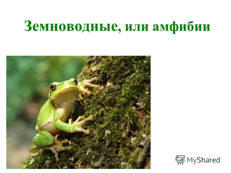 hello_html_7f797933.jpg