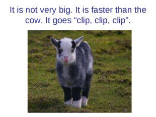 "It is not very big. It is faster than the cow. It goes ""clip, clip, clip""."