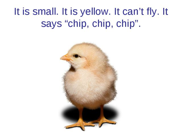 "It is small. It is yellow. It can't fly. It says ""chip, chip, chip""."