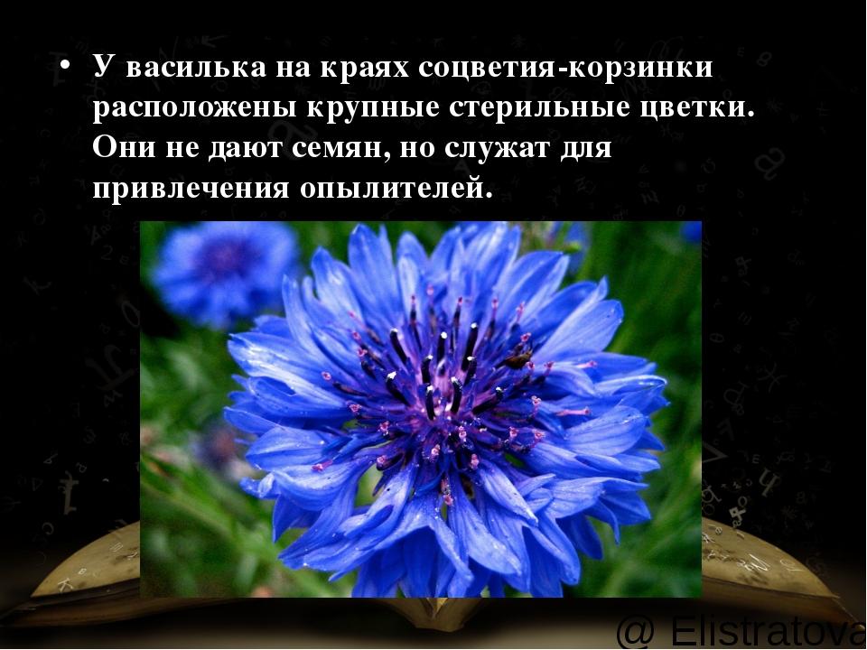 У василька накраях соцветия-корзинки расположены крупные стерильные цветки....