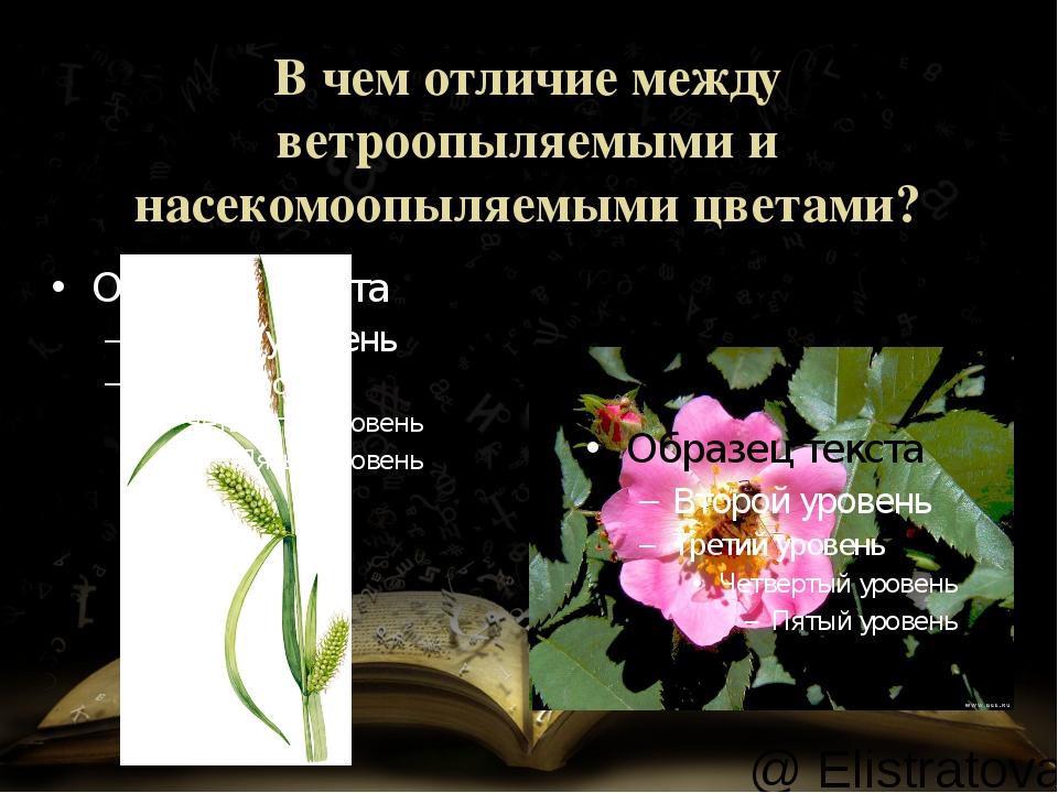 В чем отличие между ветроопыляемыми и насекомоопыляемыми цветами? @ Elistrato...