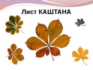 Лист КАШТАНА