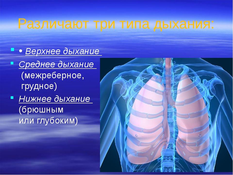 Различают три типа дыхания: • Верхнее дыхание Среднее дыхание (межреберное, г...