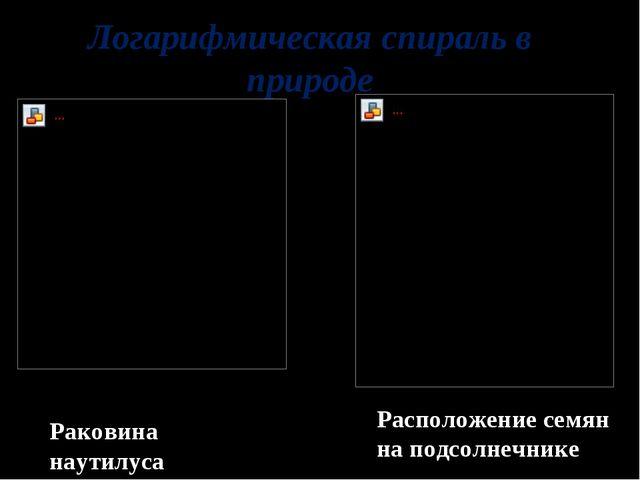 Логарифмическая спираль в природе Расположение семян на подсолнечнике Раковин...