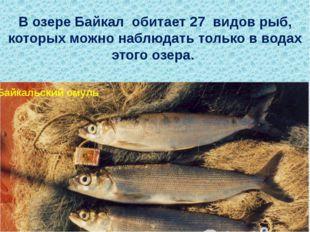 В озере Байкал обитает 27 видов рыб, которых можно наблюдать только в водах э