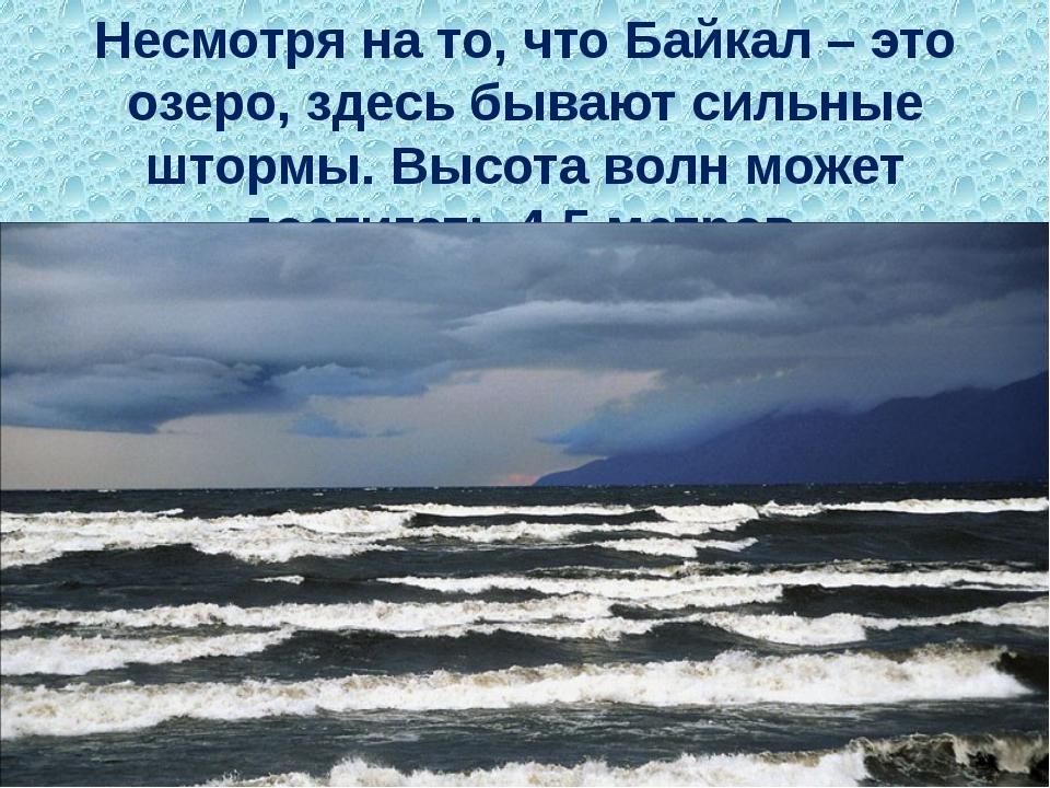 Несмотря на то, что Байкал – это озеро,здесь бывают сильные штормы. Высота в...