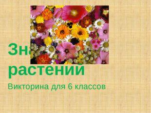 Викторина для 6 классов Знатоки растений