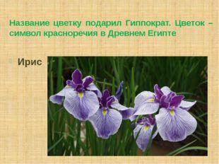 Название цветку подарил Гиппократ. Цветок – символ красноречия в Древнем Егип