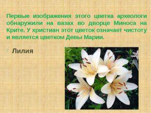 Первые изображения этого цветка археологи обнаружили на вазах во дворце Минос