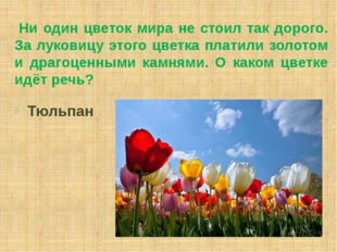 Ни один цветок мира не стоил так дорого. За луковицу этого цветка платили зо