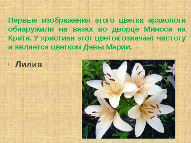 Первые изображения этого цветка археологи обнаружили на вазах во дворце Минос...