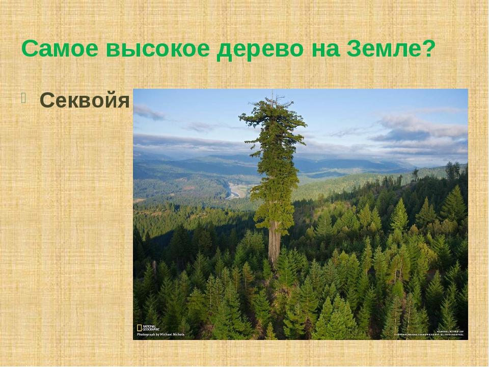 Самое высокое дерево на Земле? Секвойя
