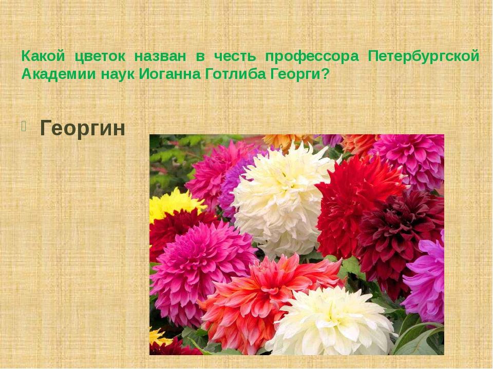 Какой цветок назван в честь профессора Петербургской Академии наук Иоганна Го...