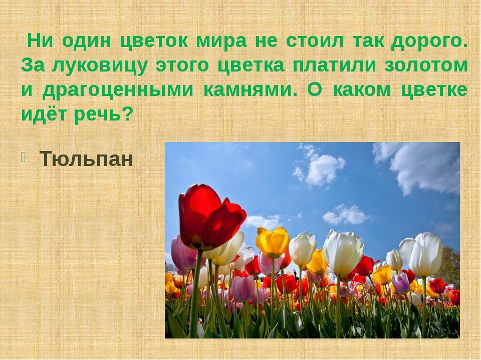 Ни один цветок мира не стоил так дорого. За луковицу этого цветка платили зо...