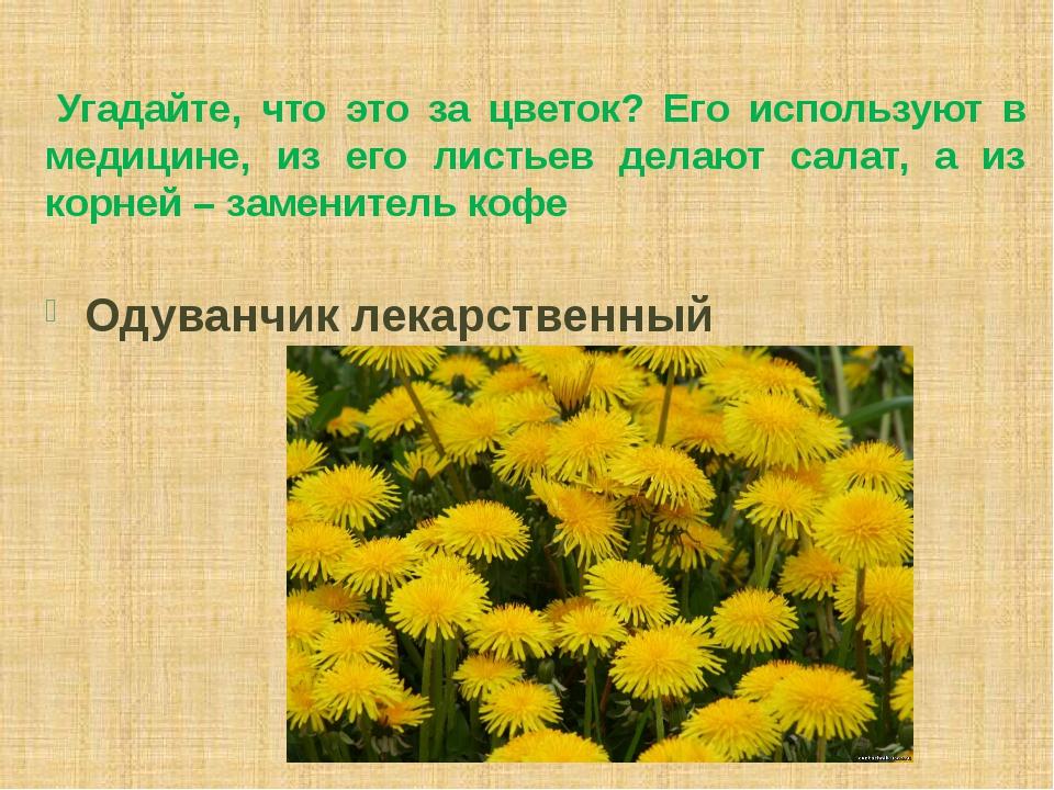 Угадайте, что это за цветок? Его используют в медицине, из его листьев делаю...