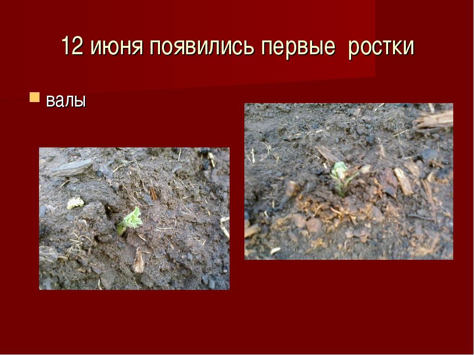 12 июня появились первые ростки валы