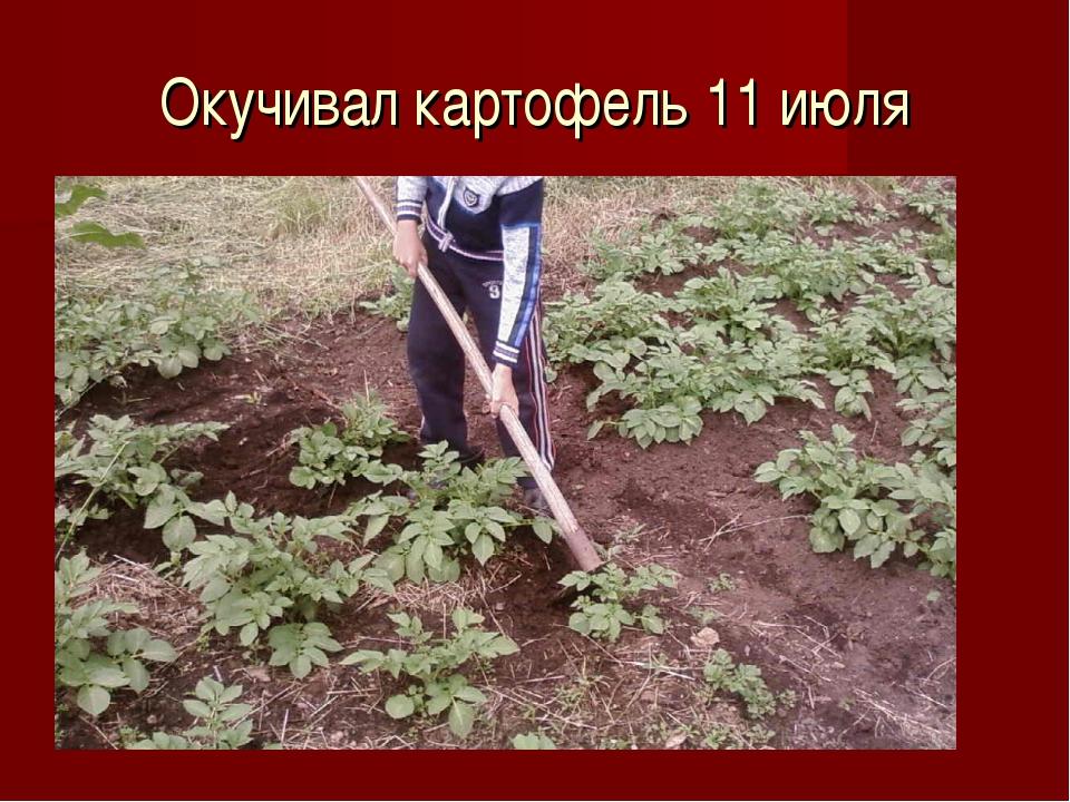 Окучивал картофель 11 июля