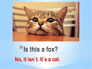 Is this a fox? No, it isn`t. It`s a cat.