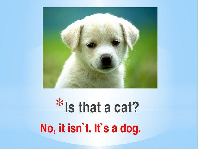 Is that a cat? No, it isn`t. It`s a dog.