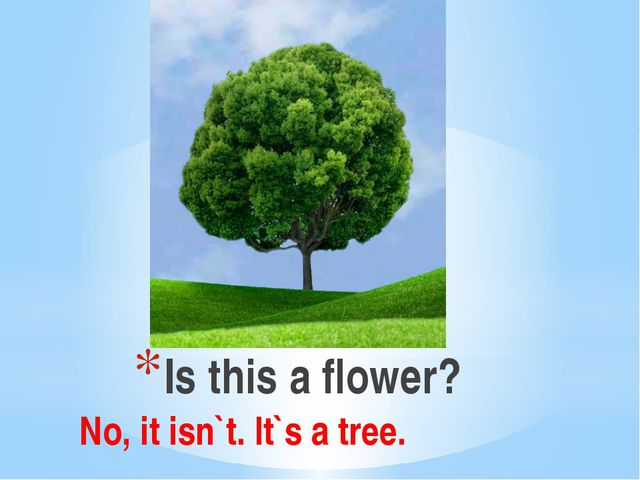 Is this a flower? No, it isn`t. It`s a tree.