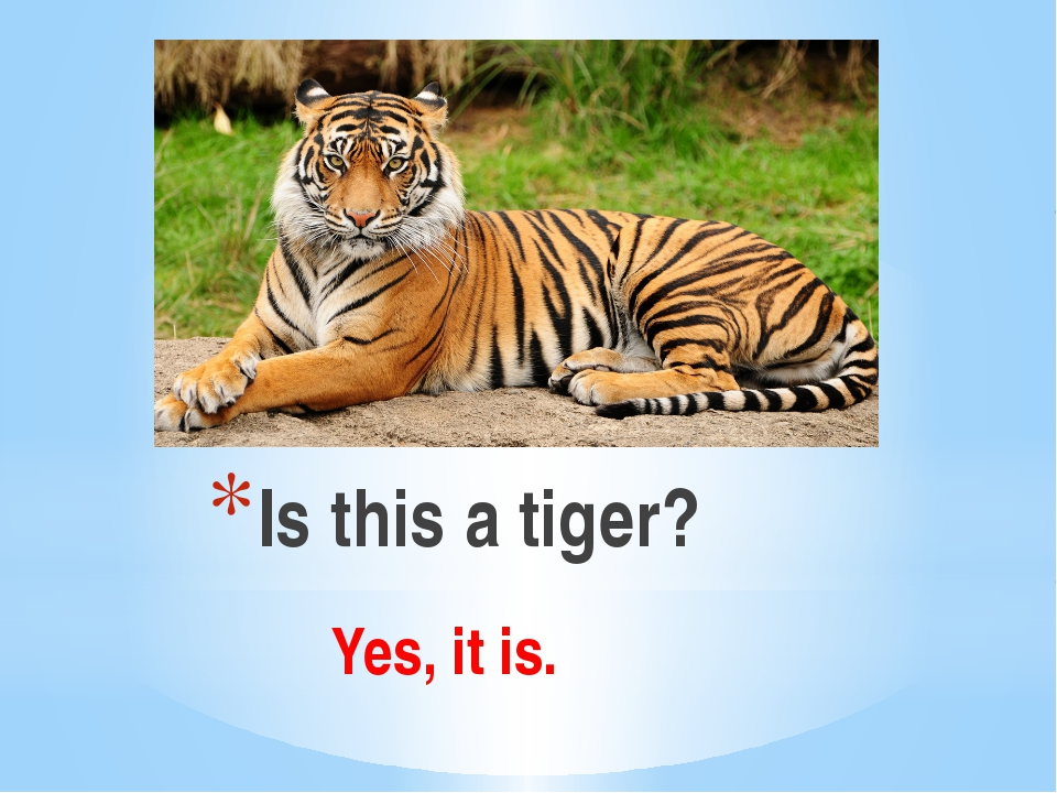 Is this a tiger? Yes, it is.