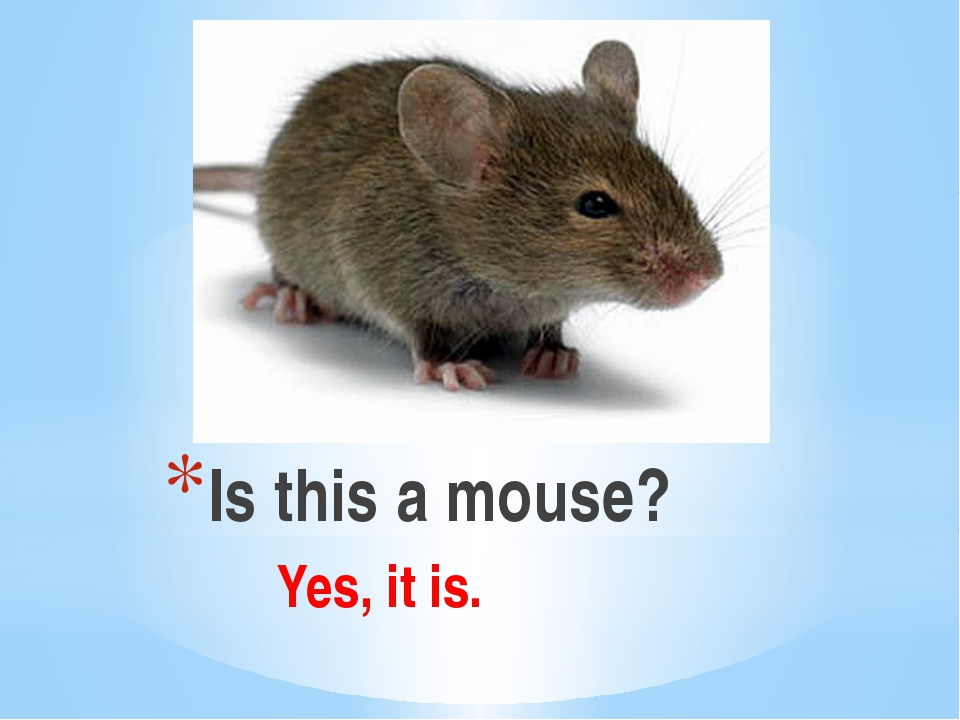 Is this a mouse? Yes, it is.