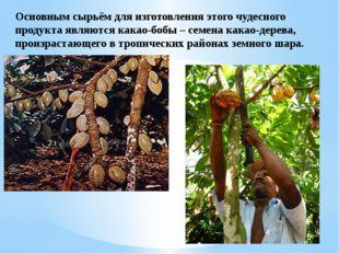 Основным сырьём для изготовления этого чудесного продукта являются какао-бобы