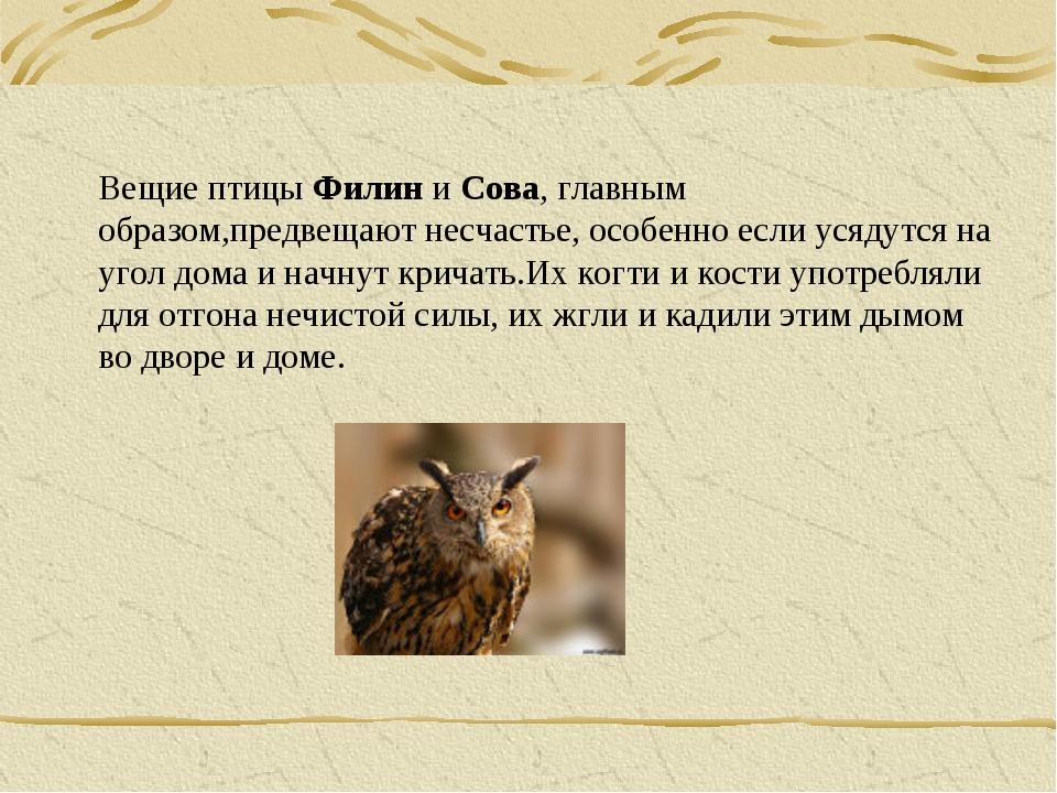 Вещие птицы Филин и Сова, главным образом,предвещают несчастье, особенно если...