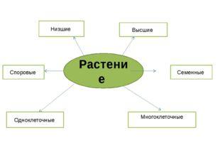 Растение Одноклеточные Многоклеточные Семенные Споровые Высшие Низшие