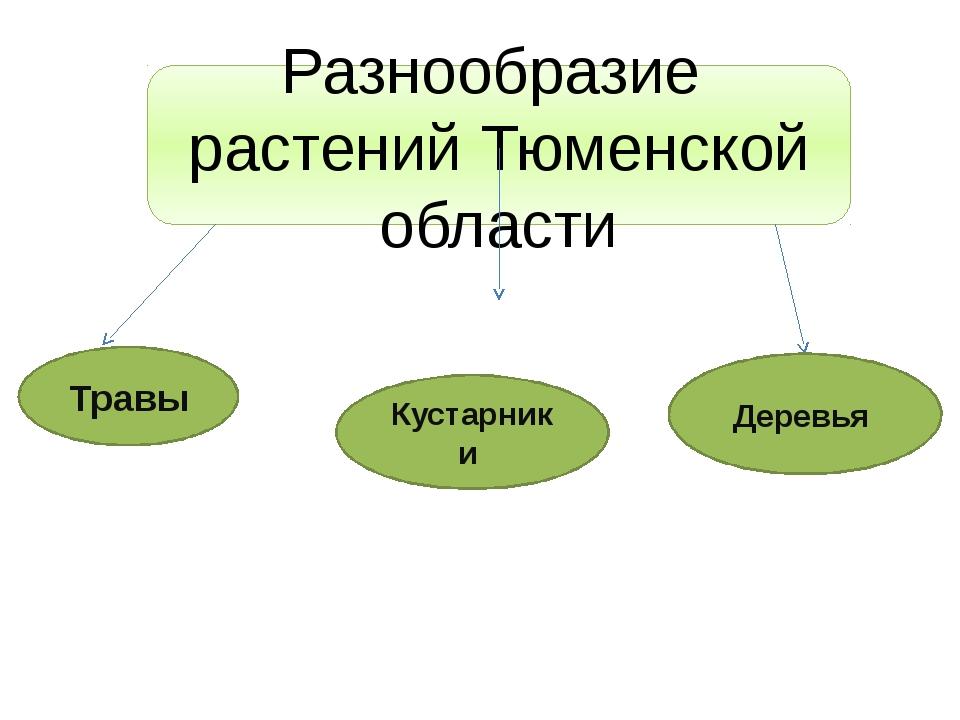 Разнообразие растений Тюменской области Травы Кустарники Деревья