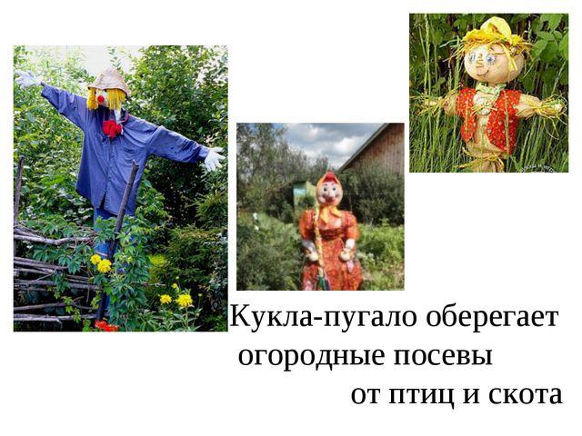 Кукла-пугало оберегает огородные посевы от птиц и скота
