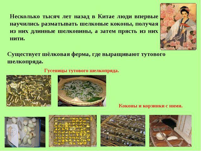 Несколько тысяч лет назад в Китае люди впервые научились разматывать шелковые...