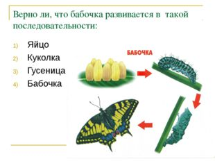 Верно ли, что бабочка развивается в такой последовательности: Яйцо Куколка Гу