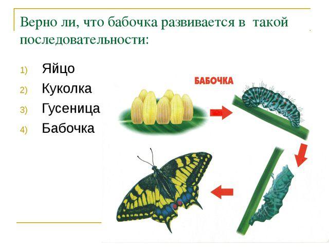 Верно ли, что бабочка развивается в такой последовательности: Яйцо Куколка Гу...