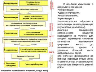 В позднем диагенезе в результате процессов конденсации, дезаминирования, вос