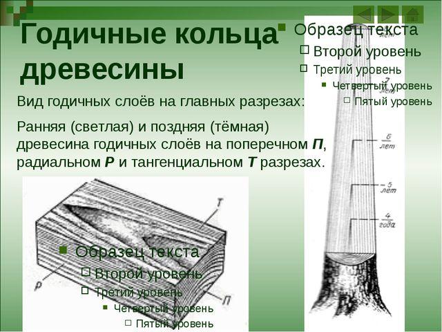 Внешнее строение листа Растение Способ прикрепления листа Число листовых пла...