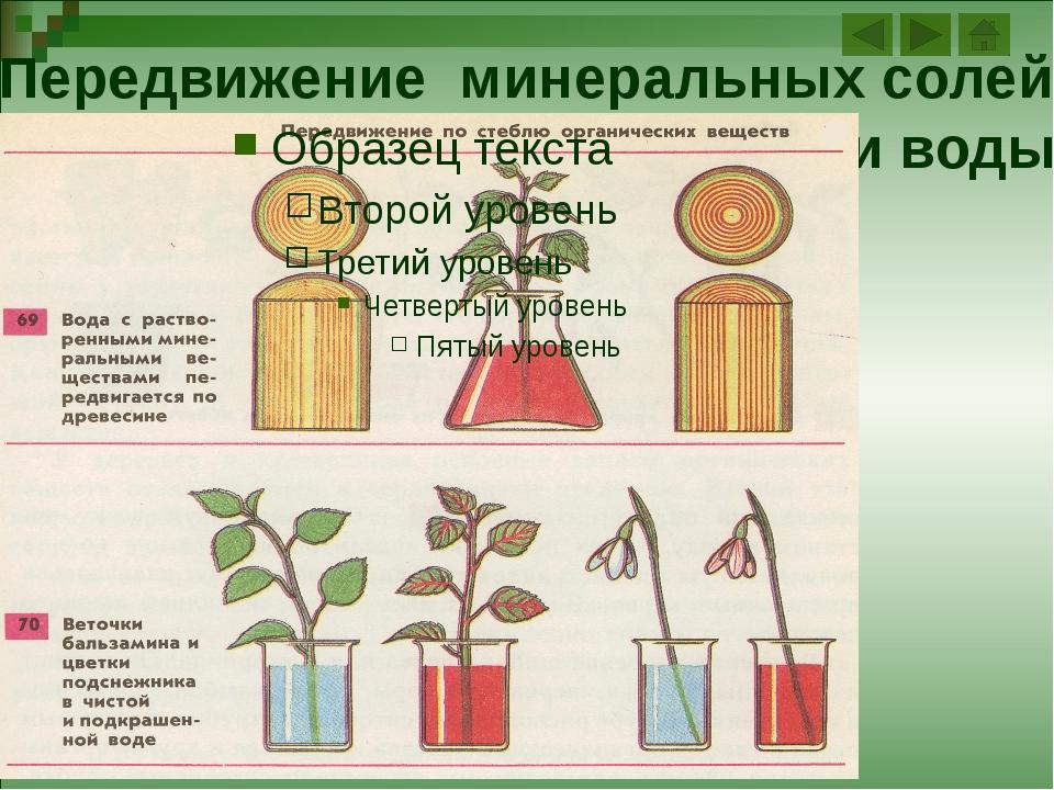 Схема строения листа 1 листовая пластинка 2 черешок 3 прилистники 4 основание