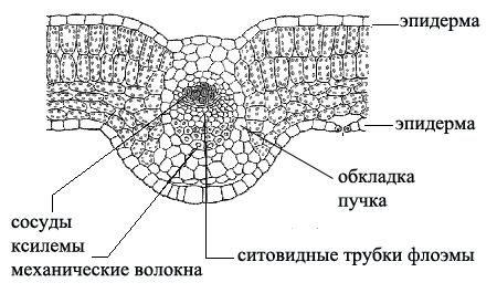http://foxford.ru/uploads/tinymce_image/image/1669/_____32_____5.jpg